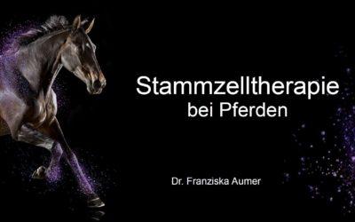 Stammzelltherapie bei Pferden