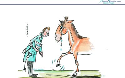 Überbeine beim Pferd